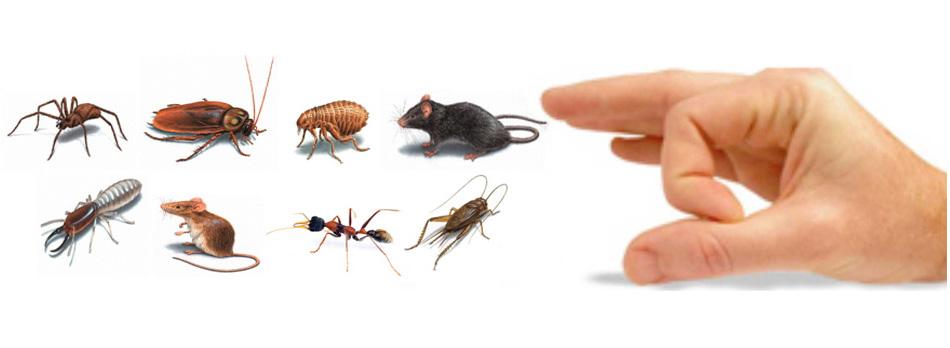 Termite Pest Control Ranchi, Patna, Mumbai, Varanasi, Gwalior, Kolkata